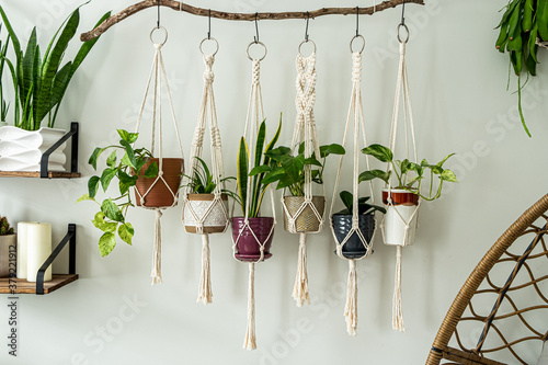 Six handmade cotton macrame plant hangers are hanging from a wood branch Canvas Print