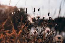 Flowers And Grass In Autumn, S...