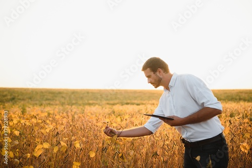 Fototapeta Young farmer in soybean fields obraz