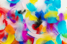 Many Colorful Feather Texture