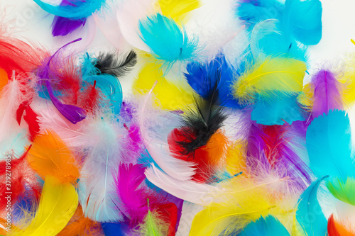 Fotografering Many colorful feather texture