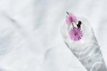 Wild Round Pink Flower In Glas...