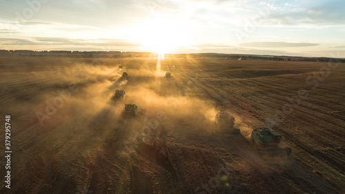 Fototapeta A beautiful shot of the harvest in the light of the setting sun golden hour. Combine group. Harvester harvests wheat. Wheat field. Agricultural industry. Tractors and combines work in the field. obraz