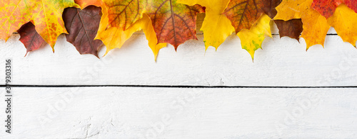 Fototapeta Composition of colourful autumn leaves on white wooden background. Fall concept. Banner obraz
