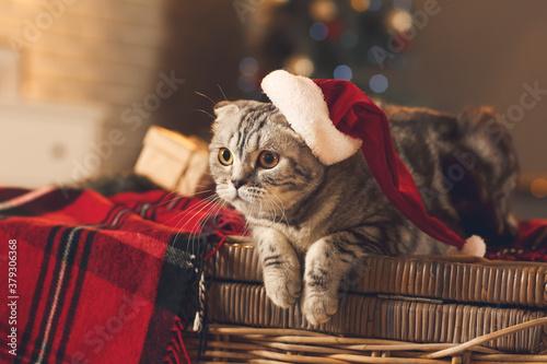 Carta da parati Cute funny cat in Santa hat at home on Christmas eve