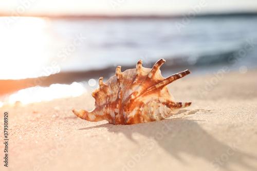 Fototapeta Beautiful sea shell on sunlit sandy beach obraz