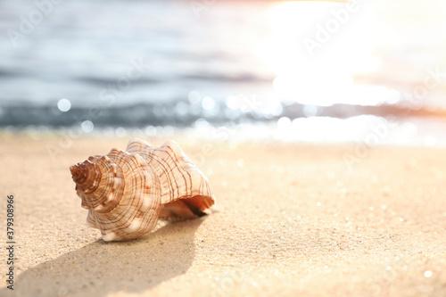 Fototapeta Beautiful sea shell on sandy beach. Space for text obraz