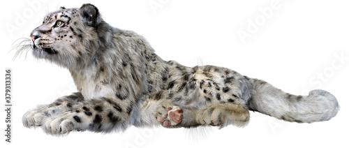 Obraz na plátně 3D Rendering Snow Leopard on White