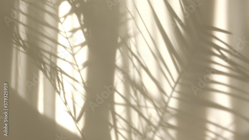 Fototapeta Morning sun lighting the room, shadow background overlays. Transparent shadow of tropical leaves. Abstract gray shadow background of natural leaves tree branch falling on white wall obraz