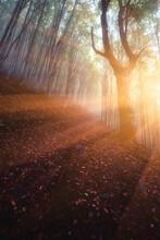 Amazing Autumn Landscape With ...