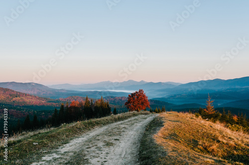 Autumn afternoon in the mountains. Trees on the edge of a hill in fall colors. The wonderful countryside in the morning. Amazing view with fog and high mountain peaks behind.