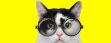 Cute Domestic Cat Wearing Glas...