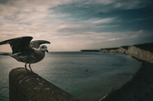 Baby Seagull Spreading Wings O...