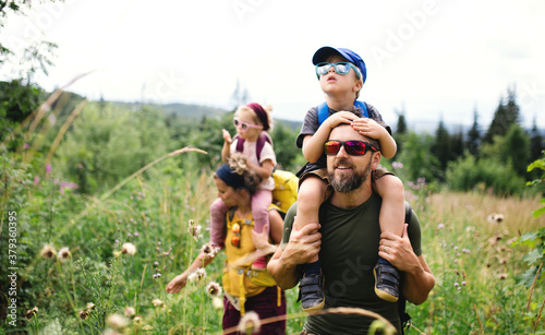 Fototapeta Family with small children hiking outdoors in summer nature. obraz
