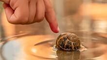 A Snail Enjoying A Swimming In...