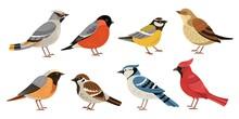 Wild Forest Birds. Winter Wild...