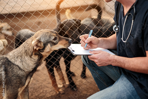 Crop veterinary visiting dogs in shelter Billede på lærred
