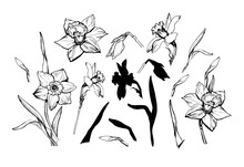 Set Of Vector Drawing Of Flowe...