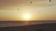 Flock of Birds Flying Above Sandy Beach and Ocean Under Sunset Sun, Slow Motion.