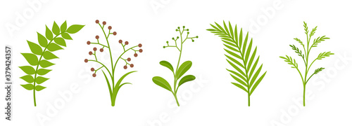 Photo Branches stems set, green plants with fresh leaves