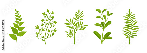 Branches spring set with greenery bushe, garden leaves Wallpaper Mural
