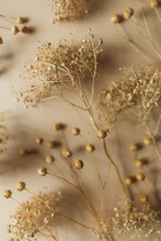 Ripe Dry Herb On Beige Backgro...