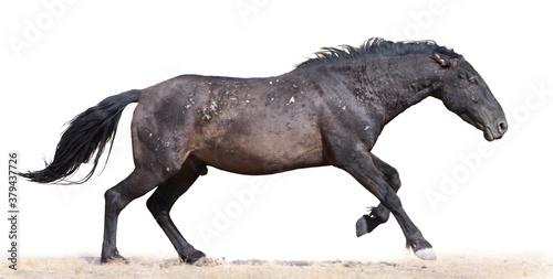 Wild horses Fotobehang