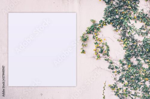 Fototapeta Feminine template for branding identity with blank paper greeting card. obraz