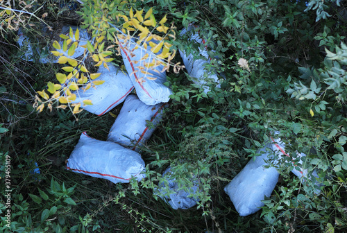 Fototapeta abandoned garbage in bags in nature obraz