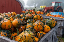 Pumpkins And Gourds In Wooden ...