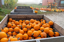 Small Pumpkins In Wooden Crate