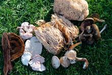 Forest Medicinal Mushrooms Clo...
