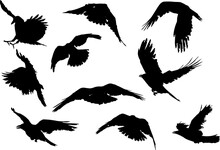 Set Of Ten Crow Silhouettes Isolated On White