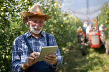 Farmer Working On Tablet During Harvest In Orchard