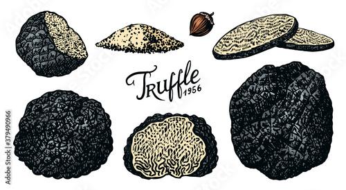 Obraz na plátně Truffles mushrooms set