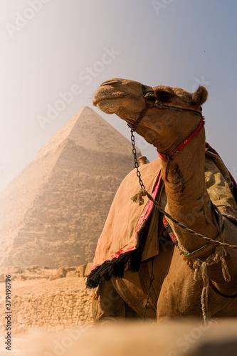 Photo pirámides en un paseo en camello por el desierto de Egipto