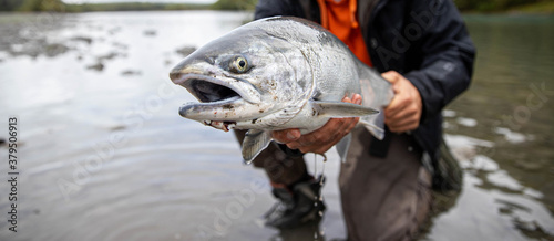 Fresh caught large Coho salmon fish being held by a fisherman above the river water in Washington State Canvas Print