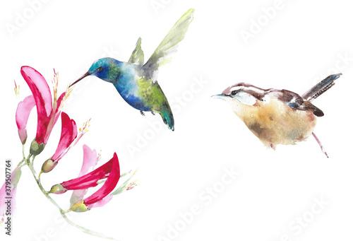 Fotografering Birds set watercolor illustration isolated on white background hummingbird wren