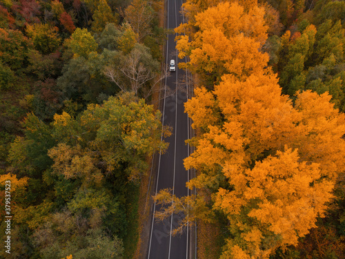 Fototapeta Aerial view of road in beautiful autumn altai forest. Beautiful landscape with empty rural road, golen autumn in altai: trees with red, yellow and orange leaves. obraz
