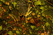 Fondo Otoñal Con Hojarasca Formada Por Trozos De Hojas Y Ramas Verdes Y Secas Caídas Sobre El Suelo Del Jardín Después De Una Fuerte Tormenta De Otoño. Ilustración Otoñal Llena De Color.