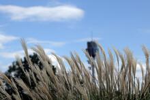 Park Reeds Field Scenic Area I...