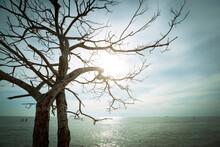 Dead Tree Isolated On Seascape...