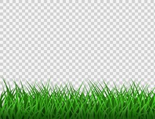 Green Grass. Spring Eco Backgr...