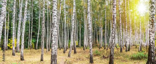 Foto Beautiful autumn birch forest.
