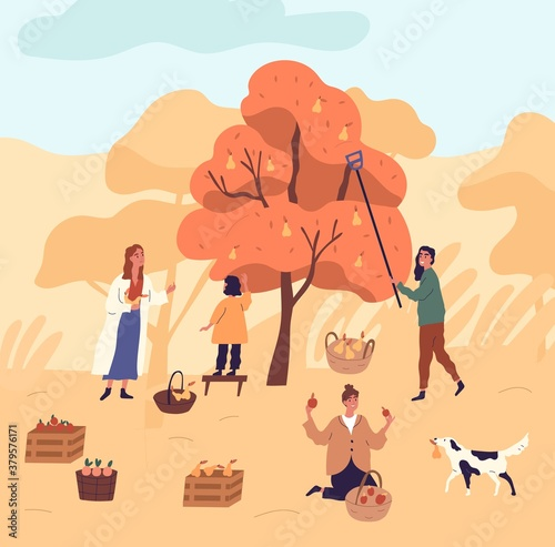 Group of women and kid picking pears from tree at garden vector flat illustration. Funny female during seasonal agricultural work. People working together putting harvest plant to baskets and crates