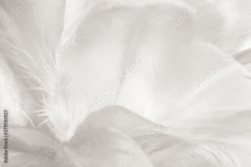 Valokuvatapetti white feather wooly pattern texture background