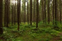 Beautiful Woodland In Early Au...