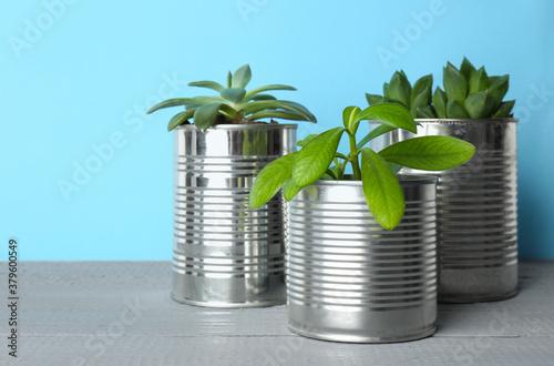 Fototapeta Beautiful houseplants in tin cans on light grey wooden table, closeup obraz