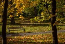 Autumn Park With A Bench Of Tall Trees With Yellow Leaves At Sunset