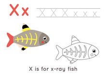 Coloring And Tracing Page With Letter X And Cute Cartoon X Ray Fish.